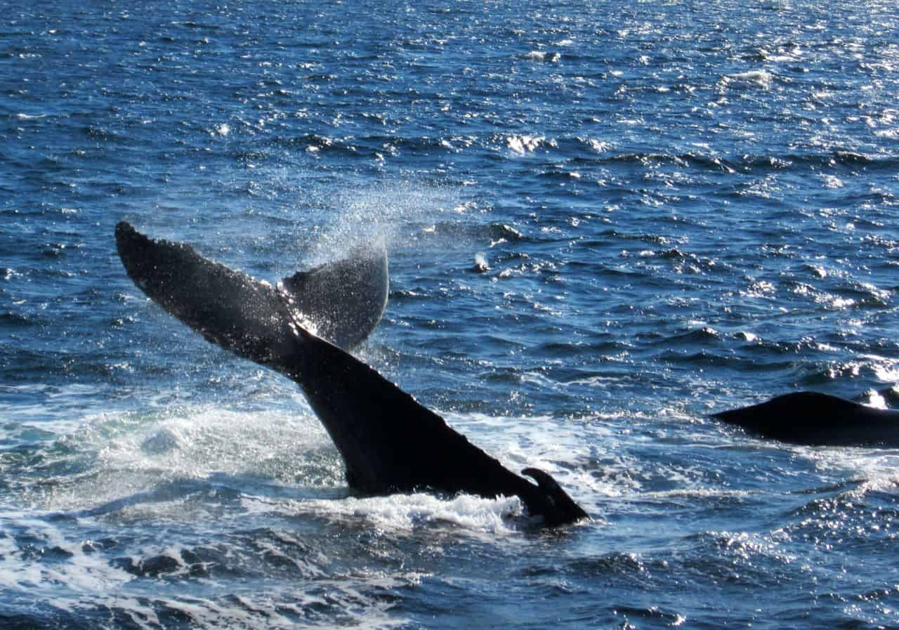 7 Seas Whale Watch – Gloucester, Massachusetts, USA