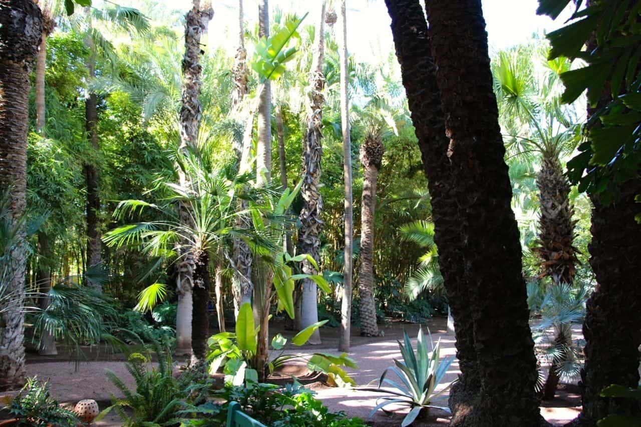 Jardin majorelle en gr n oase marrakech marokko for Jardin majorelle 2015