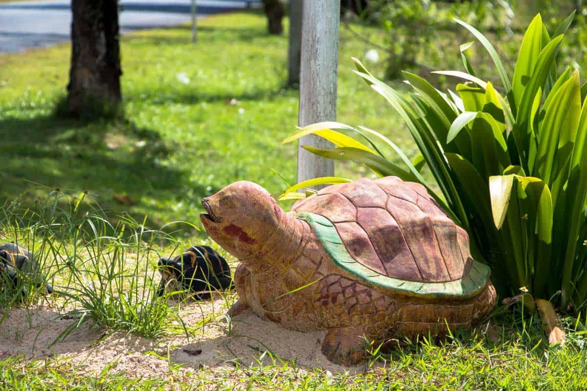 Skildpadde hospitalet for havskildpadder – Khao Lak, Thailand