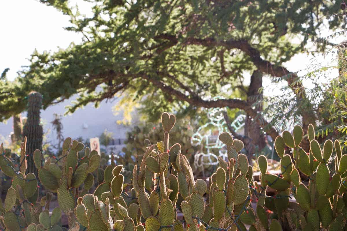 Chokoladefabrik omgivet af botanisk kaktushave – Las Vegas, USA