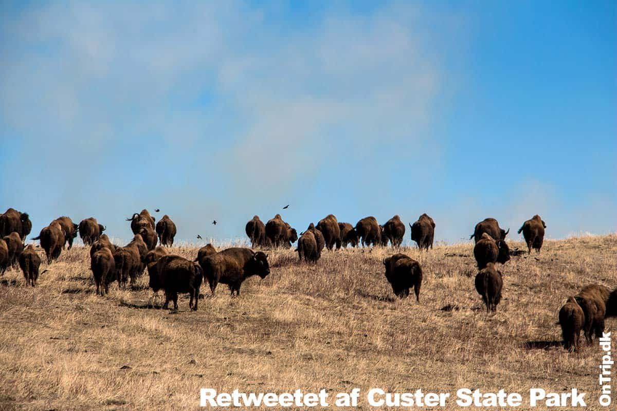 Godt Nytår 2018 - Retweetet af Custer State Park