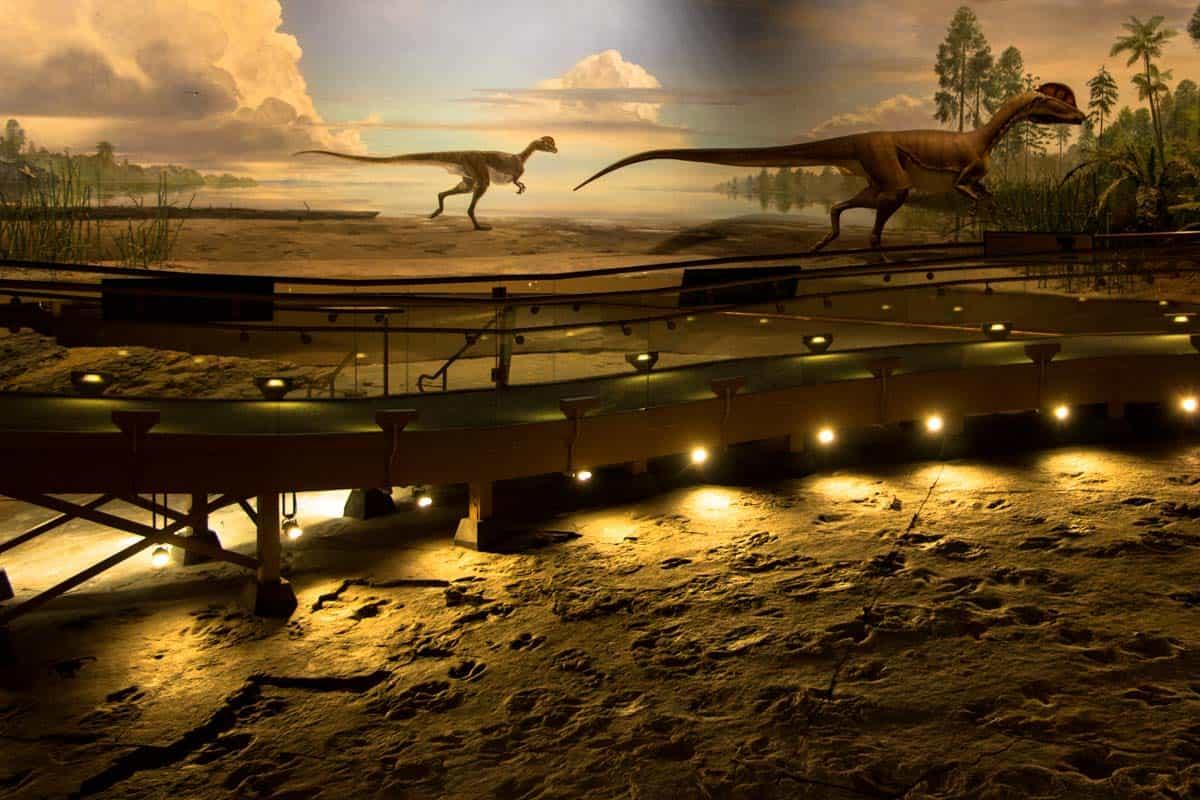 Dinosaur State Park med de mange aftryk – Connecticut, USA