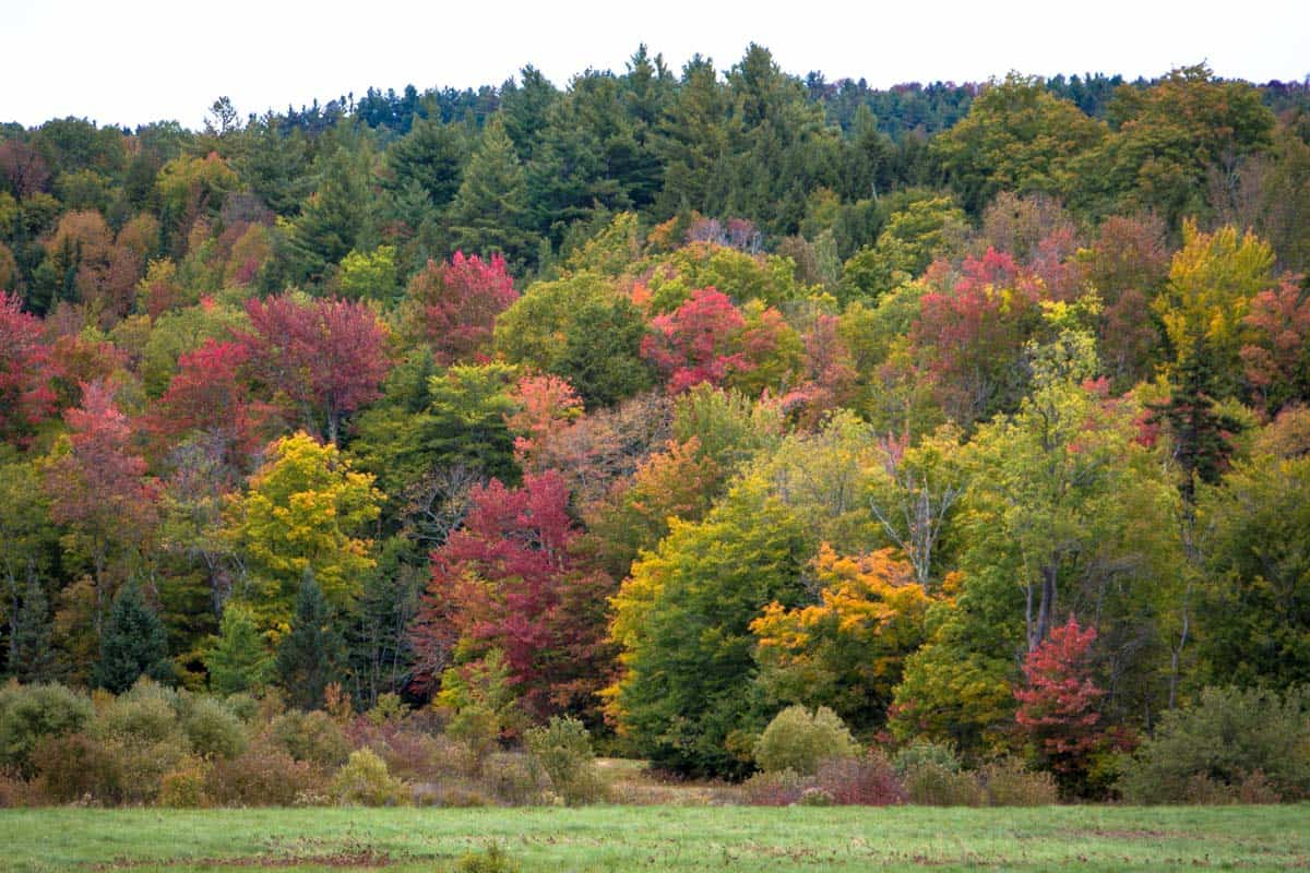 Road Trip gennem staten Vermont – USA