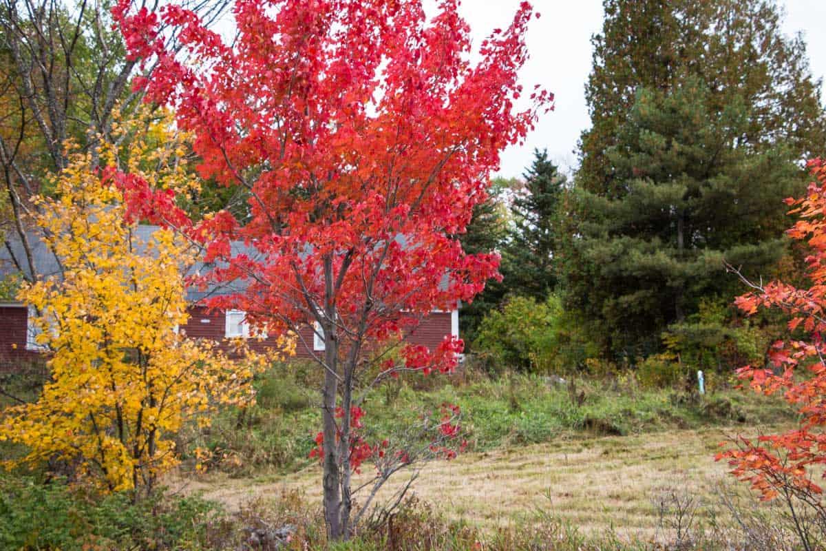 7 typiske New England oplevelser - USA
