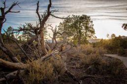 Sunset Crater Volcano er en af de yngste vulkaner Arizona USA