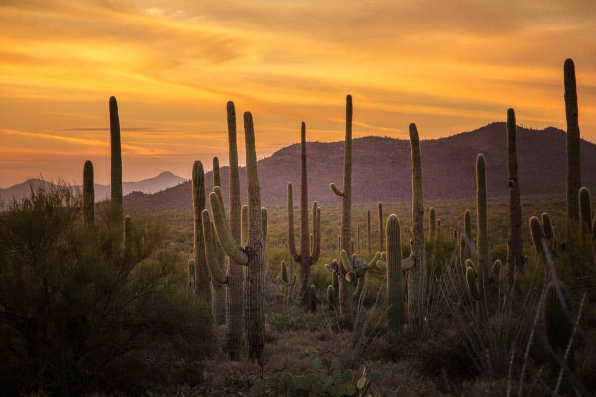 Saguaro National Park med alle kaktusserne - Arizona, USA