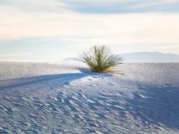 White Sands med de enorme sandklitter - New Mexico, USA