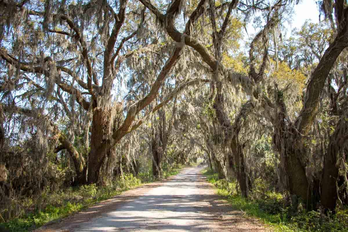 Road Trip gennem Lowcountry - South Carolina, USA