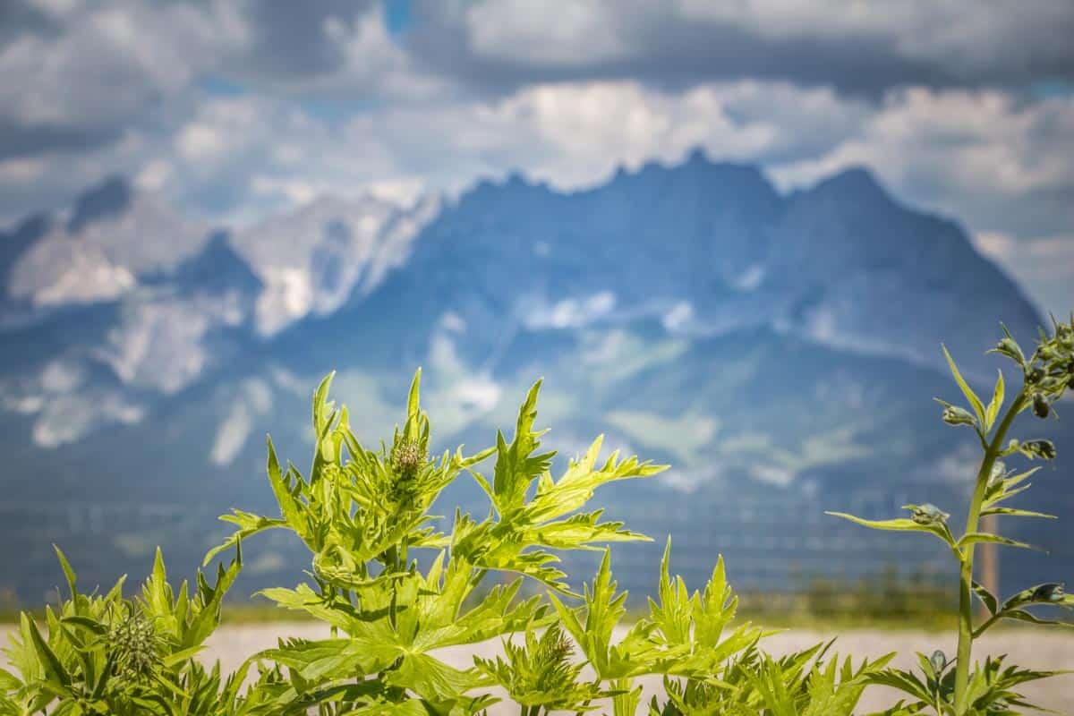 5 gode oplevelser i St. Johann in Tirol og omegn - Østrig