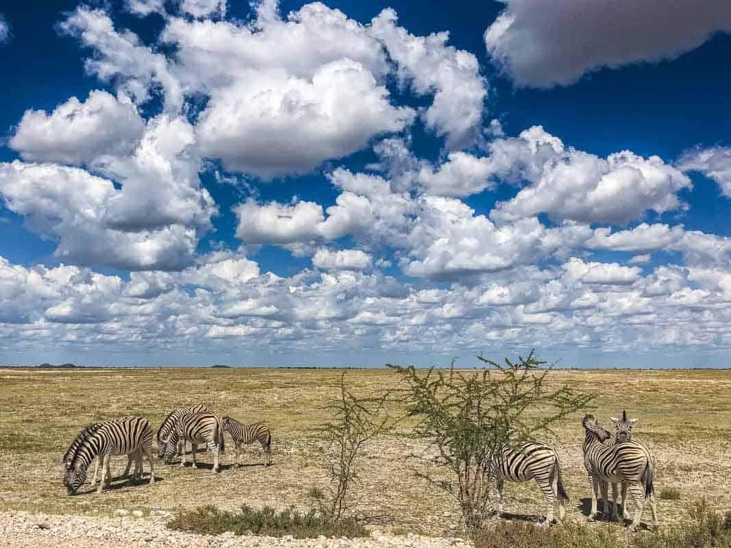 Kør-selv Safari i Etosha National Park – Namibia