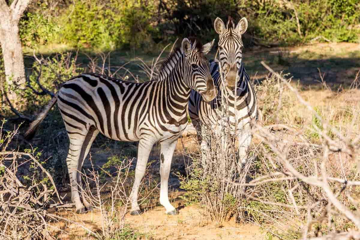 Safari ved Okonjima Plains Camp – Namibia