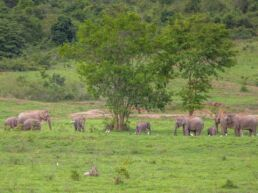 Elefanter i Kui Buri National Park - Thailand