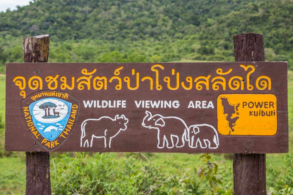 Elefanter i Kui Buri National Park - Thailand