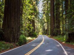 Redwood-giganterne i Humboldt State Park - USA