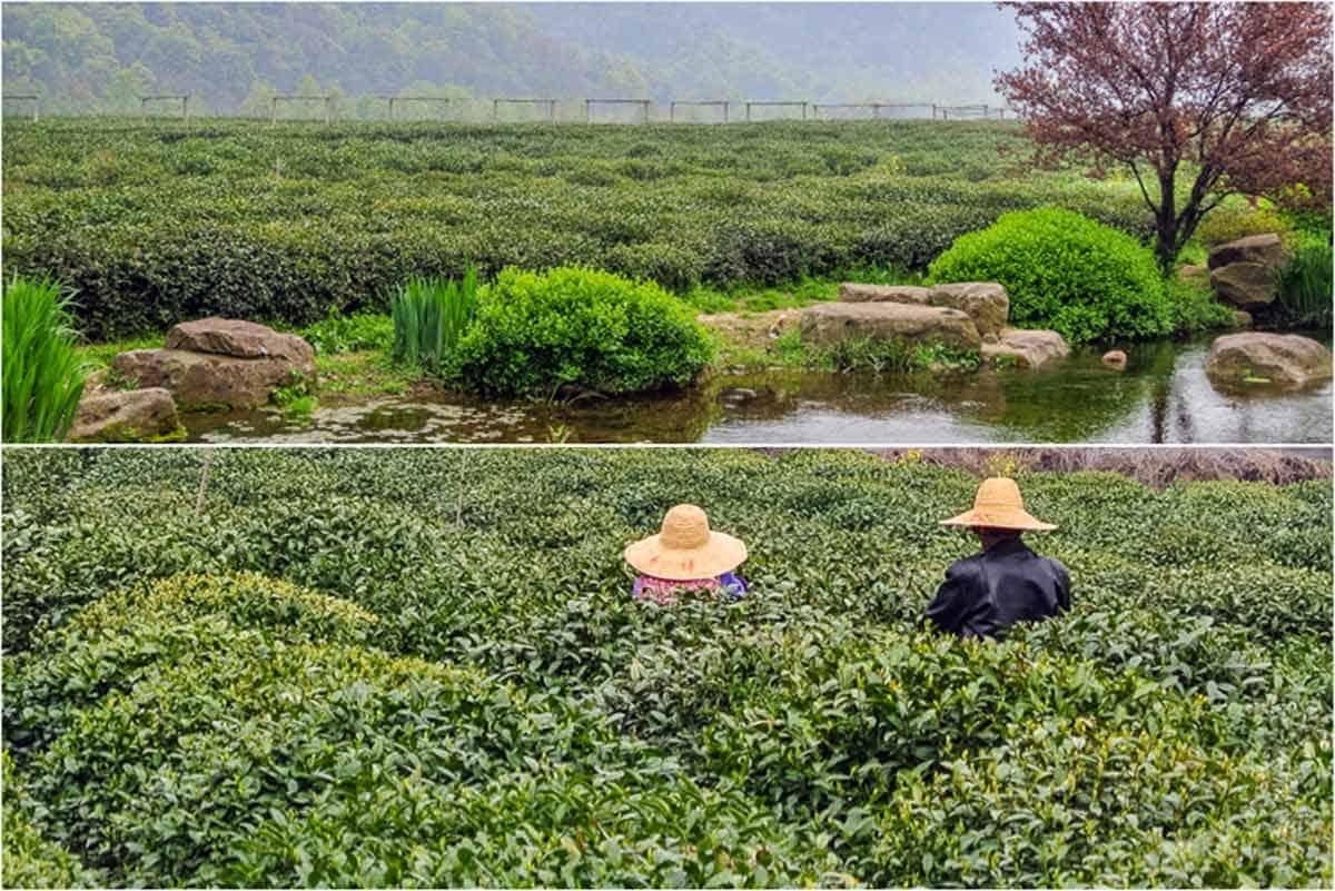 4 gode oplevelse i Hangzhou – Kina
