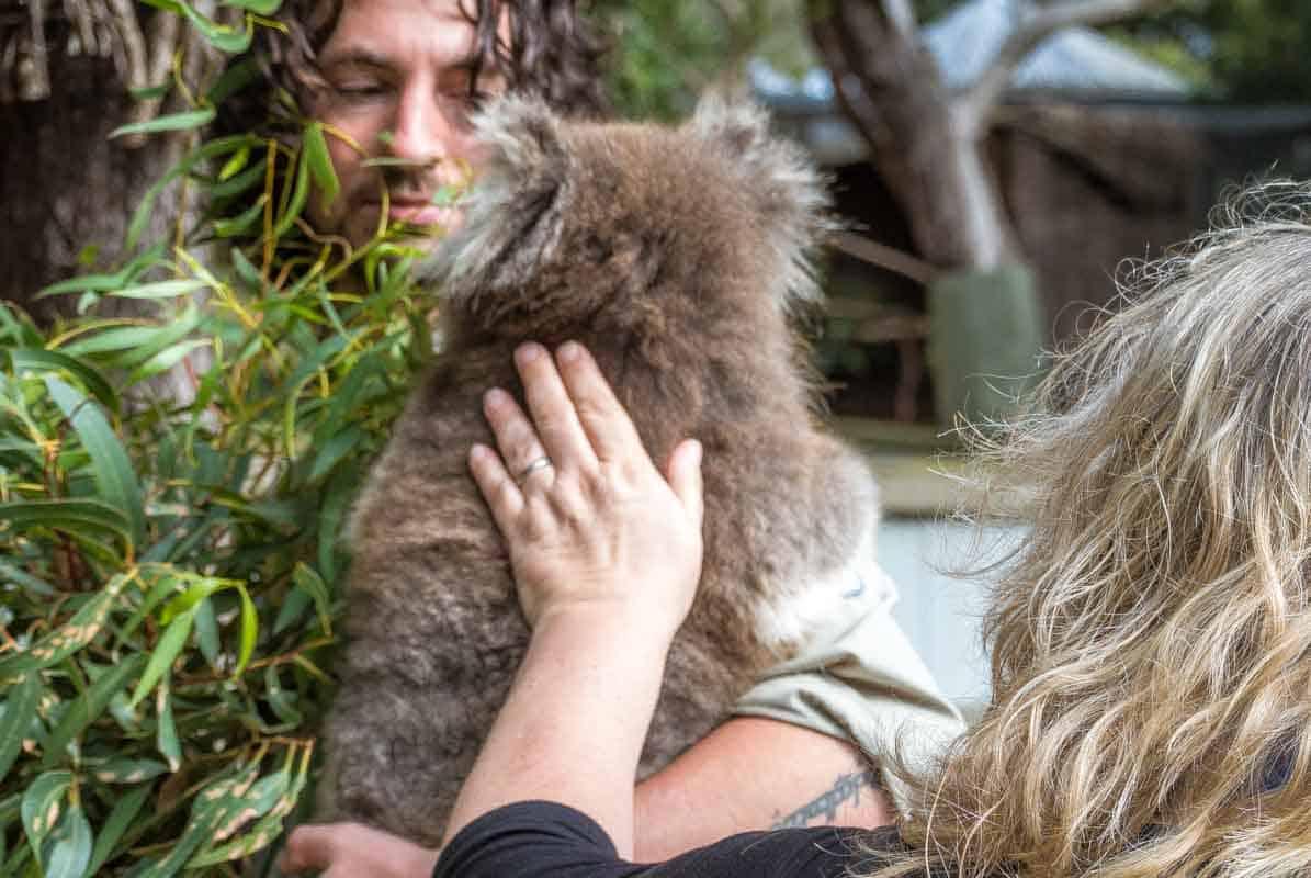 Ballarat Wildlife Park med australske dyr - Victoria, Australien
