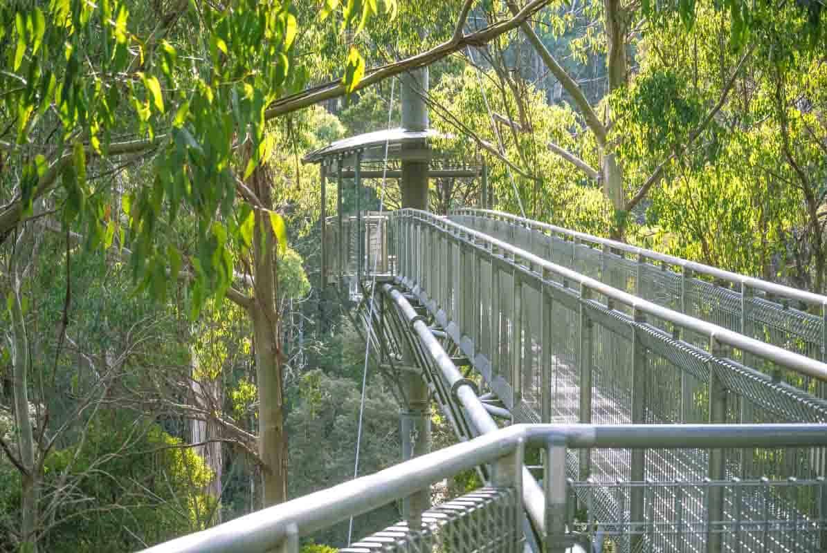 Great Otway National Park i trætoppene - Victoria, Australien