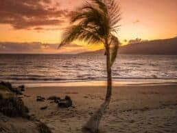 Maui en af verdens smukkeste øer - Hawaii