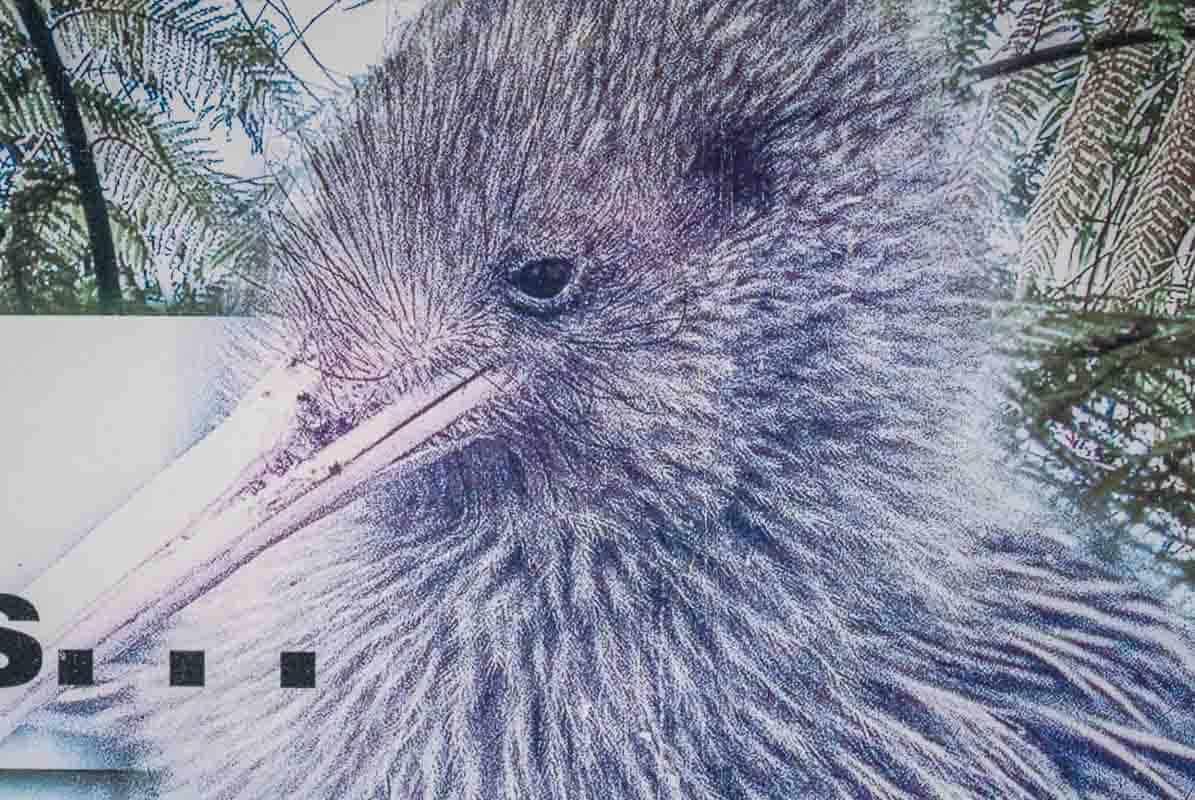 Oplevelser I Christchurch - New Zealand