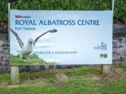 Royal Albatross Center med de enorme albatrosser - Taiaroa head, New Zealand