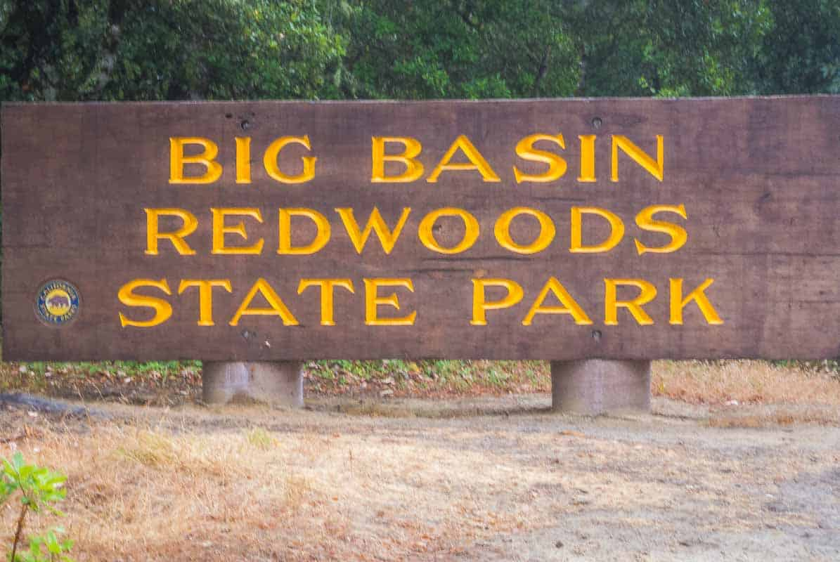 Big Basin Redwood‏s State Park med de enorme træer - Californien, USA