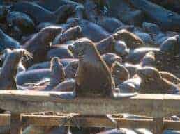 Monterey en hyggelig fiskerby - Californien, USA