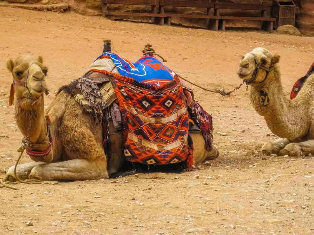 Petra oldtidsbyen er et af verdens syv vidundere - Jordan