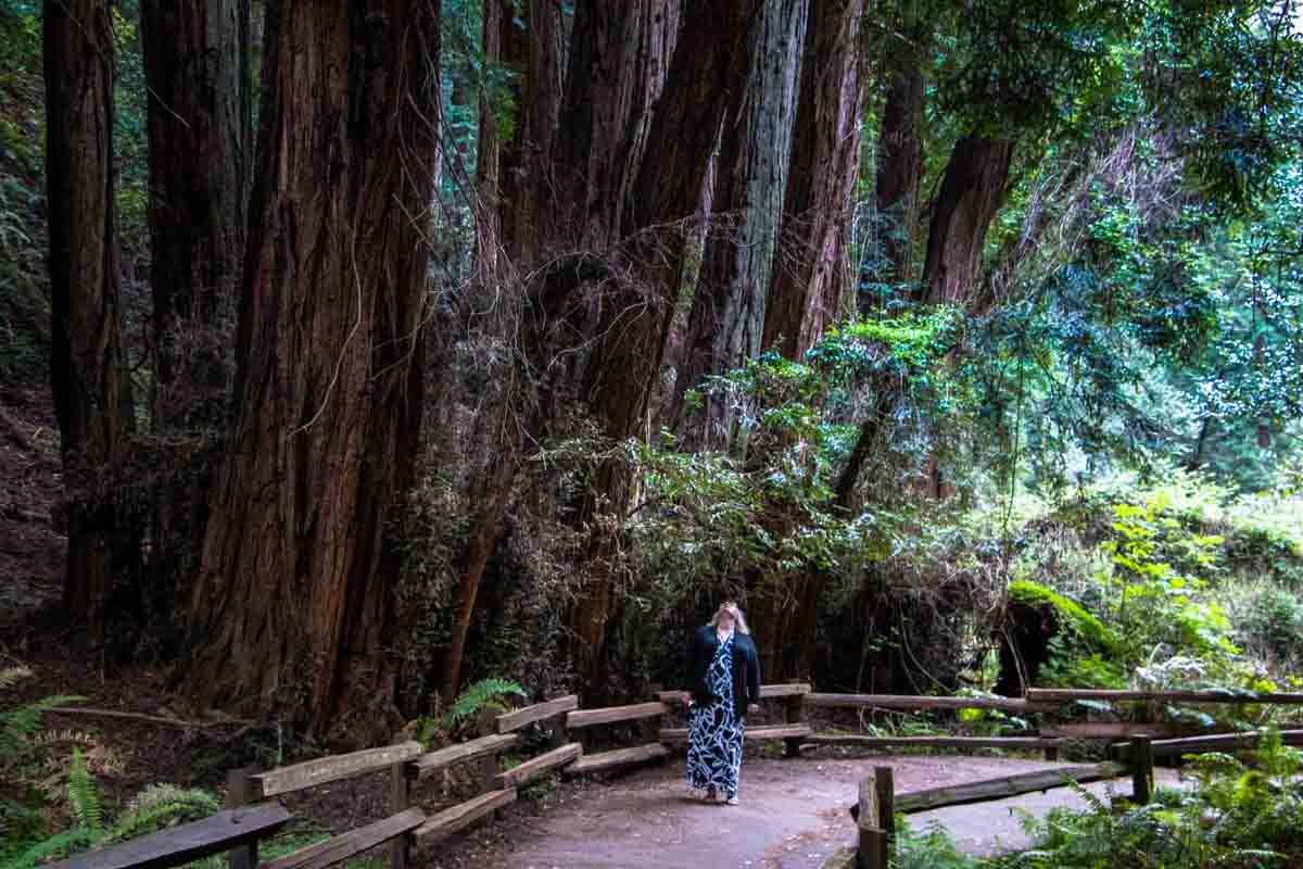 Rejseforslag Road Trip – Alternative oplevelser i Californien, USA