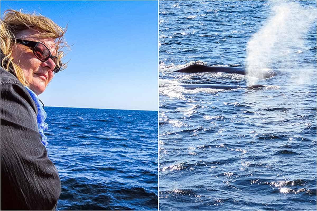 Hvalsafari på Atlanterhavet – Gloucester, USA