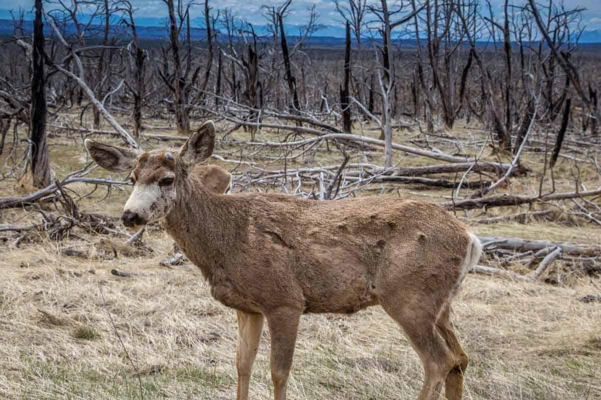 Rejseforslag Road Trip - Naturoplevelser i Colorado og Utah, USA