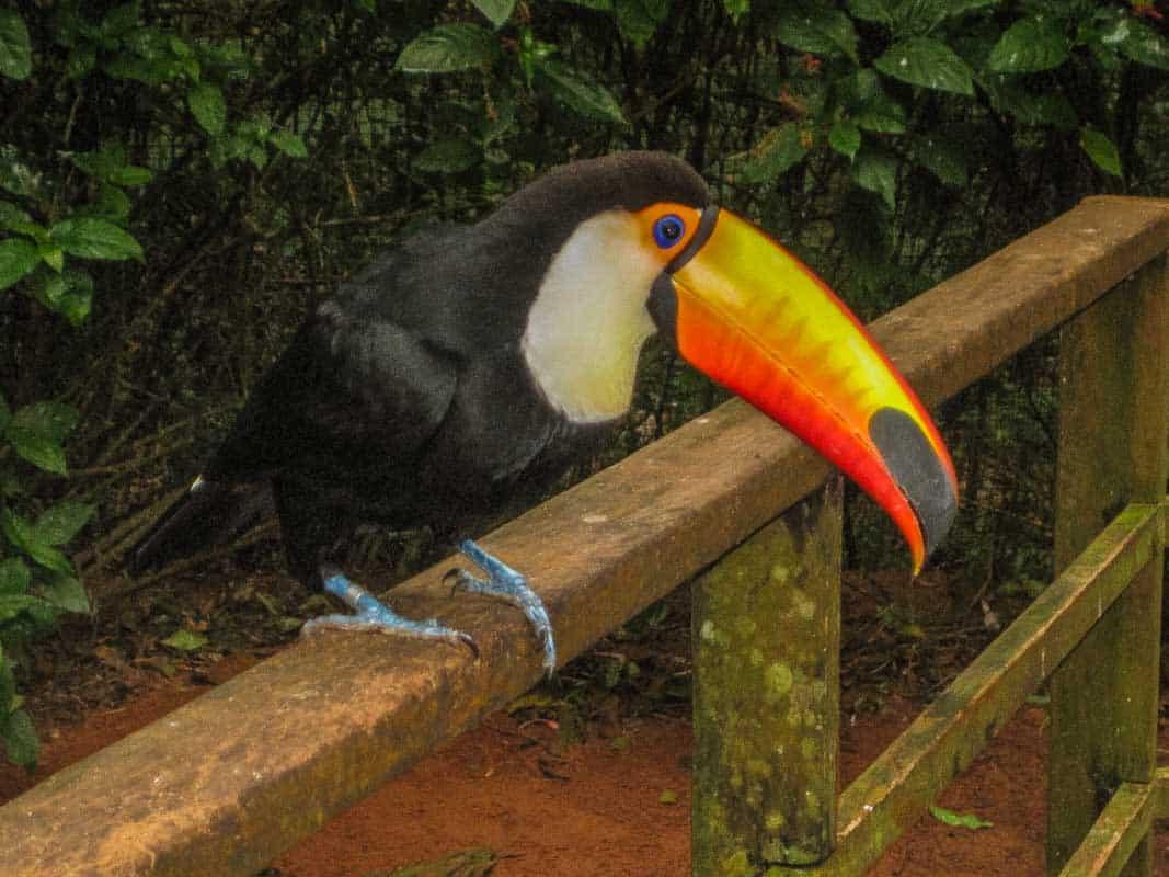 Fugleparken Parque das Aves - Foz do Iguacu, Brasilien